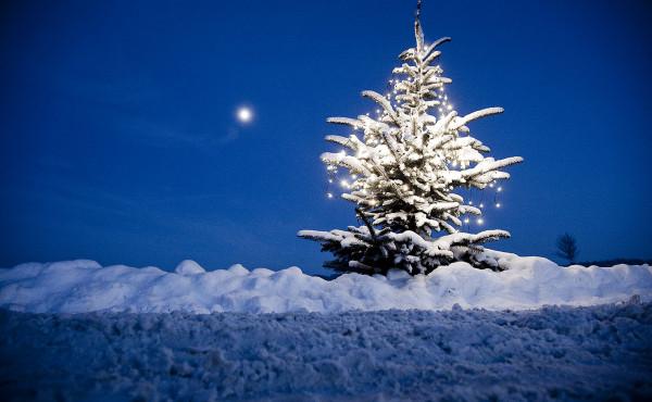 Winterlandschaft mit Weihnachtsbaum zwischen Icker und Rulle im Landkreis Osnabrück © Detlef Heese